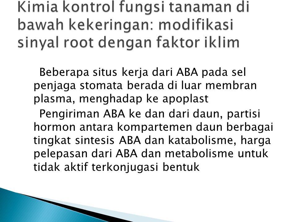 Beberapa situs kerja dari ABA pada sel penjaga stomata berada di luar membran plasma, menghadap ke apoplast Pengiriman ABA ke dan dari daun, partisi hormon antara kompartemen daun berbagai tingkat sintesis ABA dan katabolisme, harga pelepasan dari ABA dan metabolisme untuk tidak aktif terkonjugasi bentuk