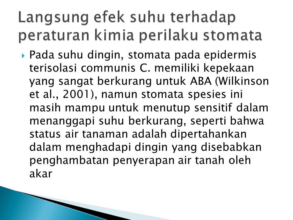  Pada suhu dingin, stomata pada epidermis terisolasi communis C.