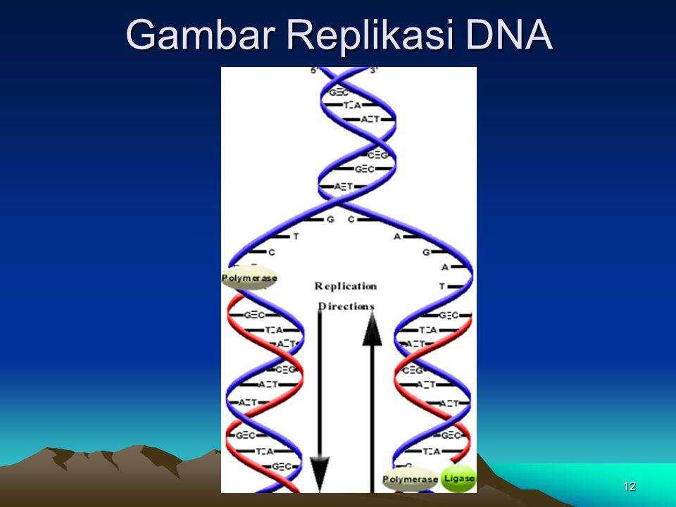 Gambar Replikasi DNA 12