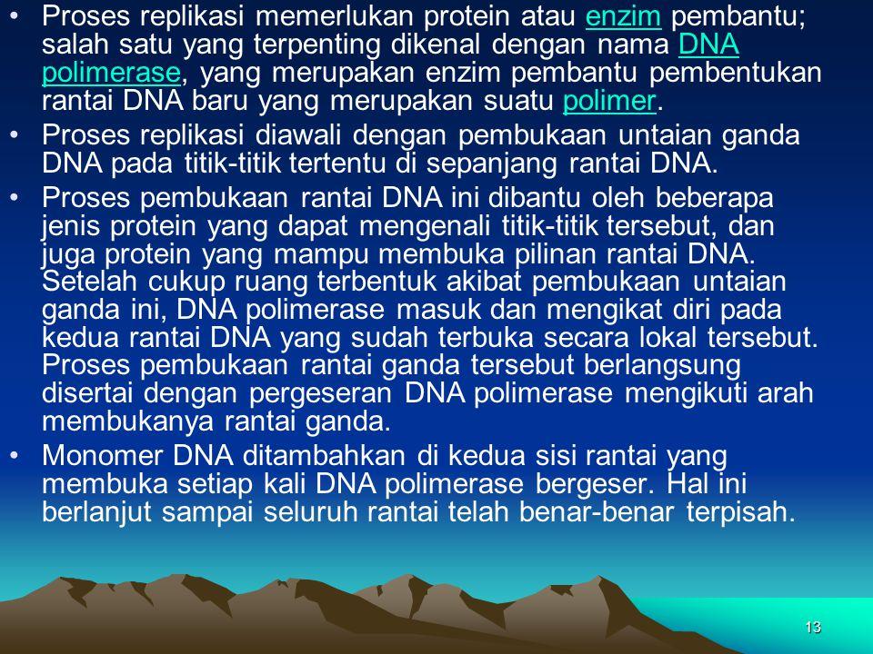 13 Proses replikasi memerlukan protein atau enzim pembantu; salah satu yang terpenting dikenal dengan nama DNA polimerase, yang merupakan enzim pemban