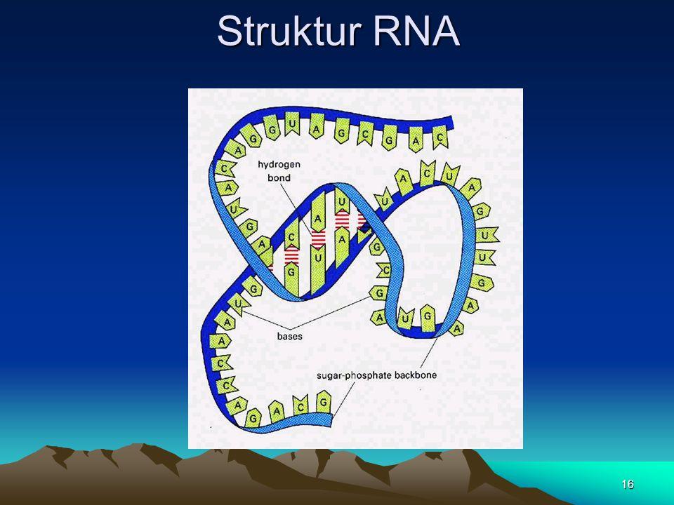 Struktur RNA 16