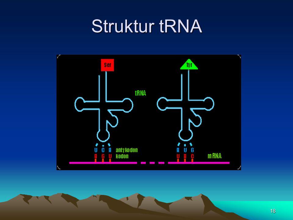 Struktur tRNA 18