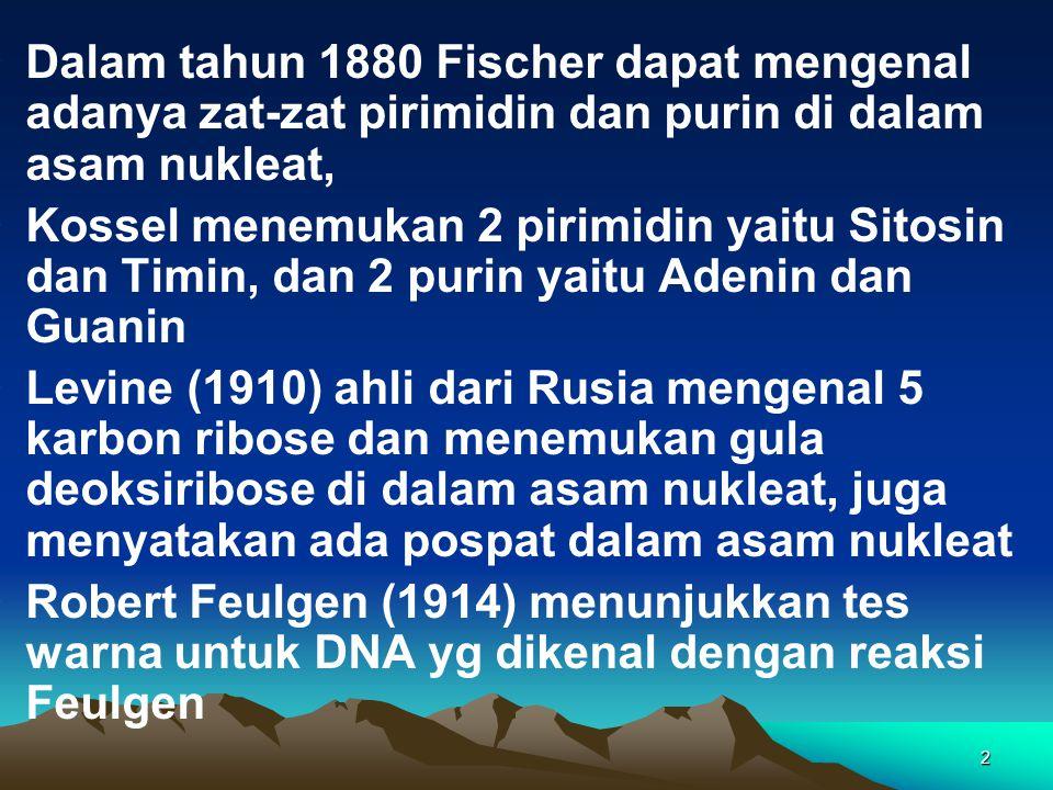 2 Dalam tahun 1880 Fischer dapat mengenal adanya zat-zat pirimidin dan purin di dalam asam nukleat, Kossel menemukan 2 pirimidin yaitu Sitosin dan Tim