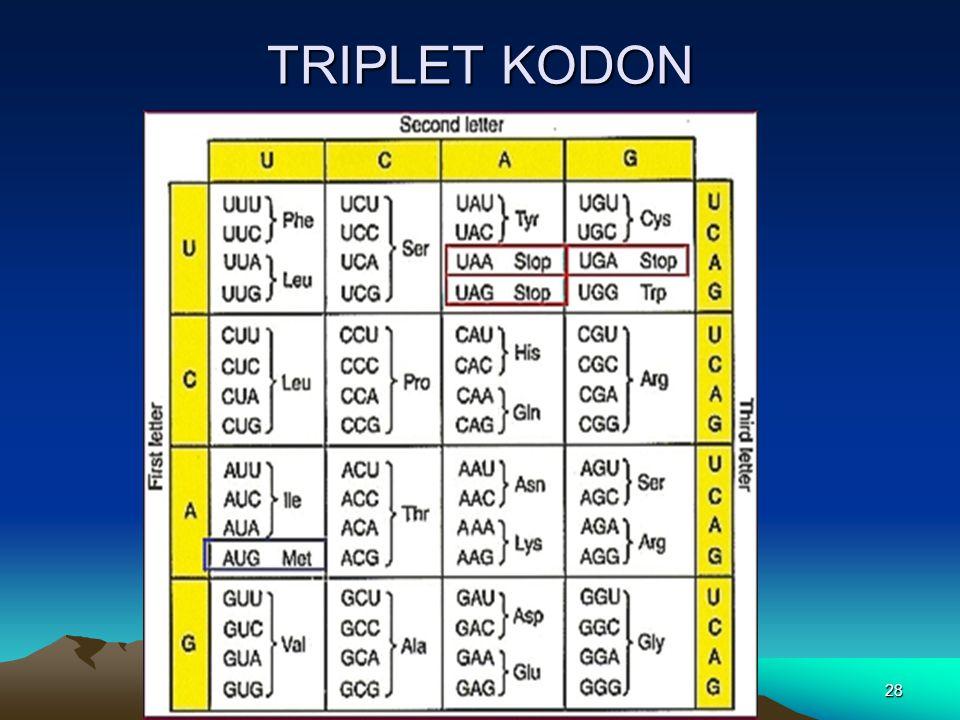 TRIPLET KODON 28