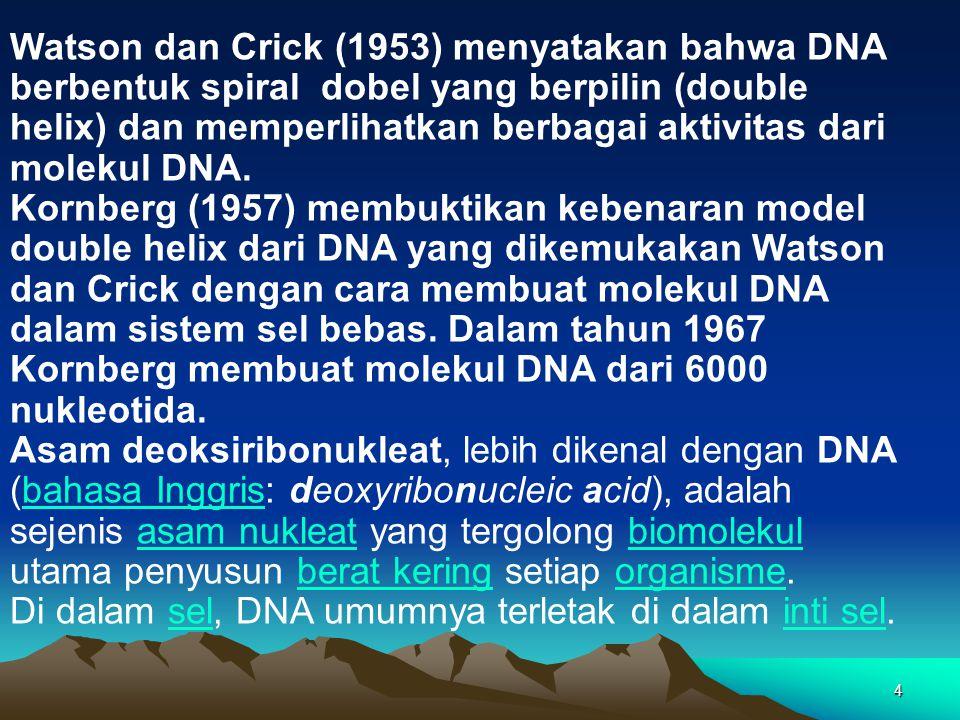 4 Watson dan Crick (1953) menyatakan bahwa DNA berbentuk spiral dobel yang berpilin (double helix) dan memperlihatkan berbagai aktivitas dari molekul