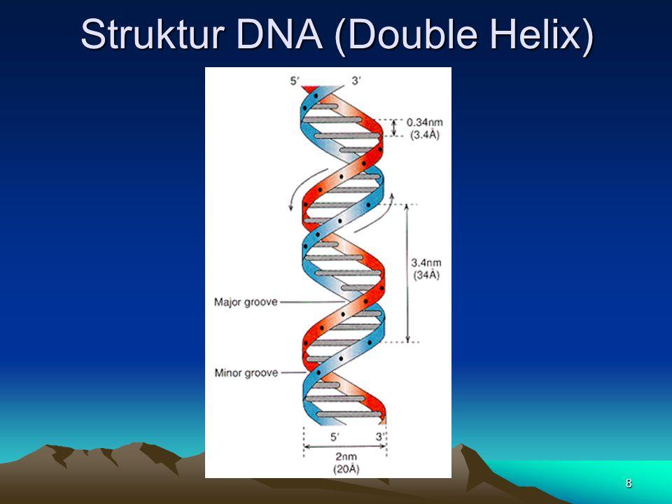 Struktur DNA (Double Helix) 8