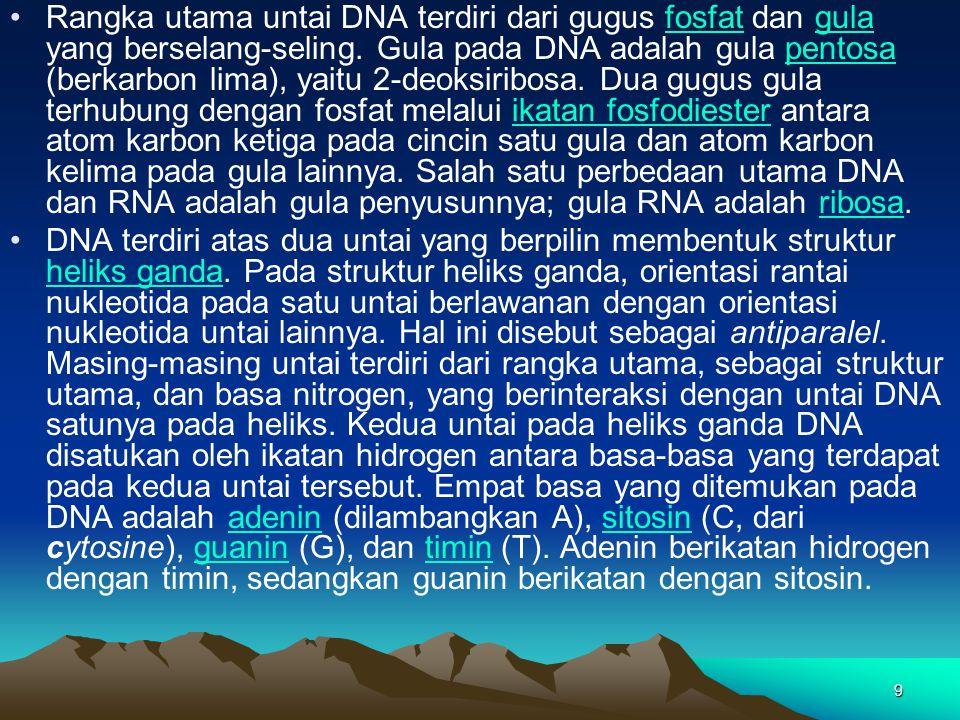 9 Rangka utama untai DNA terdiri dari gugus fosfat dan gula yang berselang-seling. Gula pada DNA adalah gula pentosa (berkarbon lima), yaitu 2-deoksir