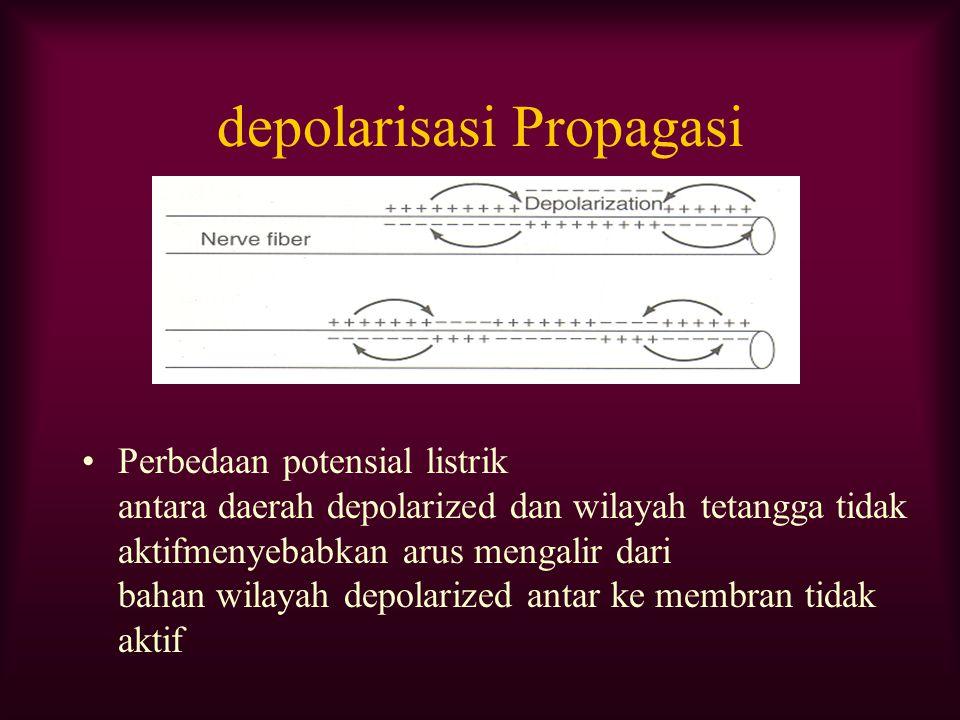 depolarisasi Propagasi Perbedaan potensial listrik antara daerah depolarized dan wilayah tetangga tidak aktifmenyebabkan arus mengalir dari bahan wila