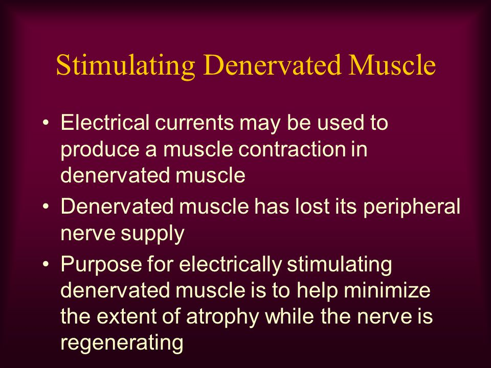Stimulating Denervated Muscle Electrical currents may be used to produce a muscle contraction in denervated muscle Denervated muscle has lost its peri