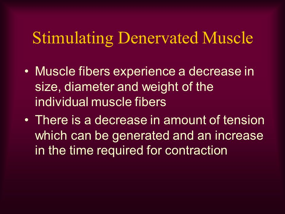 Stimulating Denervated Muscle Muscle fibers experience a decrease in size, diameter and weight of the individual muscle fibers There is a decrease in