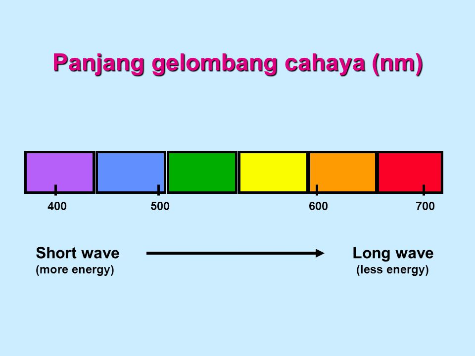 Panjang gelombang cahaya (nm) 400500600700 Short waveLong wave (more energy)(less energy)
