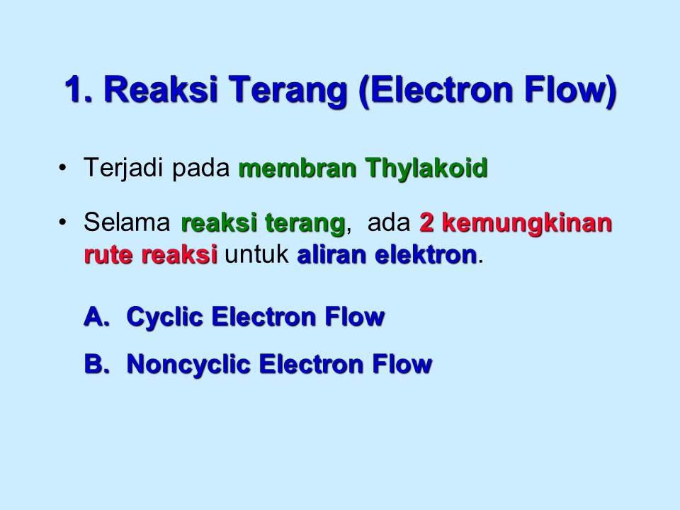 1. Reaksi Terang (Electron Flow) membran ThylakoidTerjadi pada membran Thylakoid reaksi terang2 kemungkinan rute reaksi aliran elektronSelama reaksi t