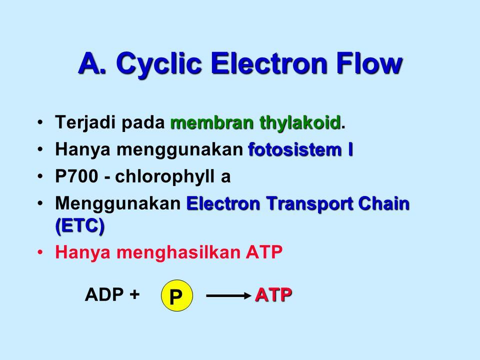 A. Cyclic Electron Flow membran thylakoidTerjadi pada membran thylakoid. fotosistem IHanya menggunakan fotosistem I P700 - chlorophyll a Electron Tran