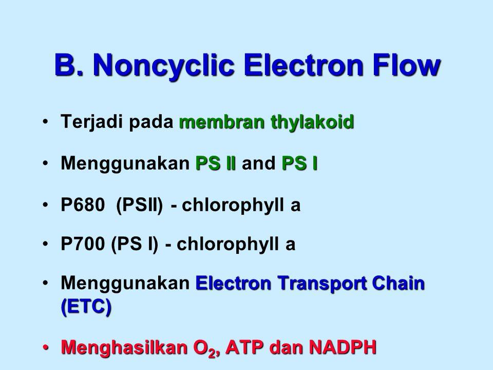 B. Noncyclic Electron Flow membranthylakoidTerjadi pada membran thylakoid PS IIPS IMenggunakan PS II and PS I P680 (PSII) - chlorophyll a P700 (PS I)