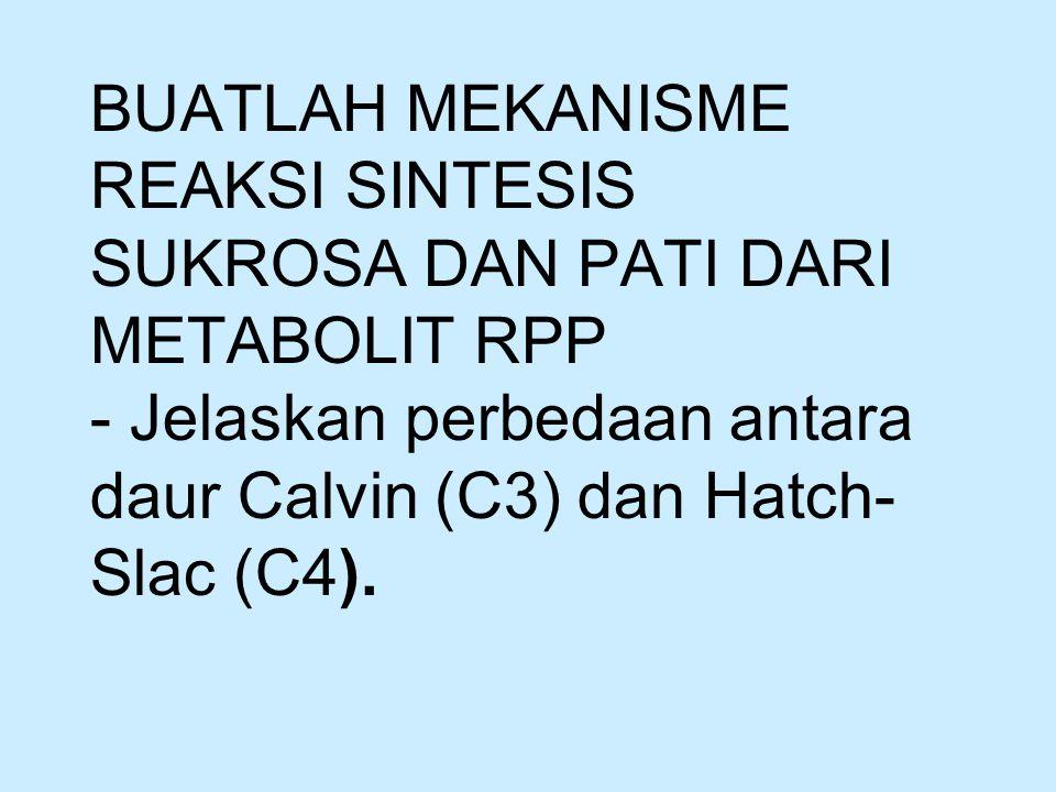 TUGAS BUATLAH MEKANISME REAKSI SINTESIS SUKROSA DAN PATI DARI METABOLIT RPP - Jelaskan perbedaan antara daur Calvin (C3) dan Hatch- Slac (C4).