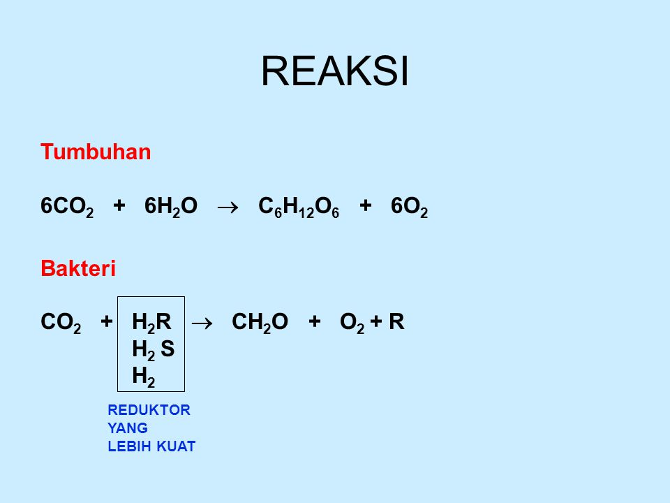 REAKSI Tumbuhan 6CO 2 + 6H 2 O  C 6 H 12 O 6 + 6O 2 Bakteri CO 2 + H 2 R  CH 2 O + O 2 + R H 2 S H 2 REDUKTOR YANG LEBIH KUAT