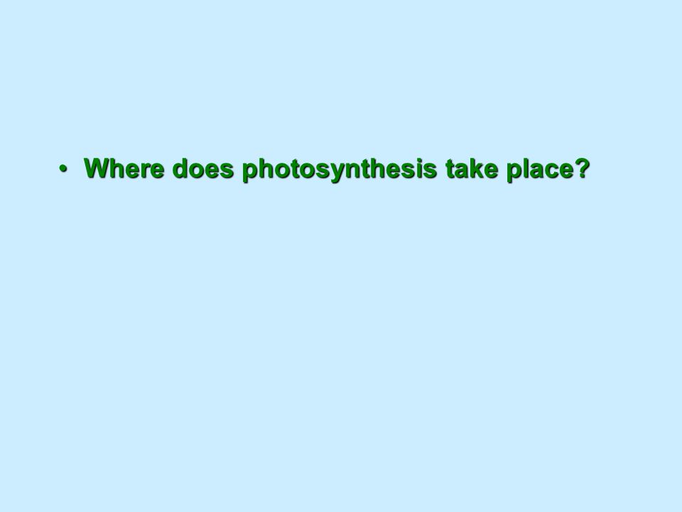 Where does photosynthesis take place?Where does photosynthesis take place?