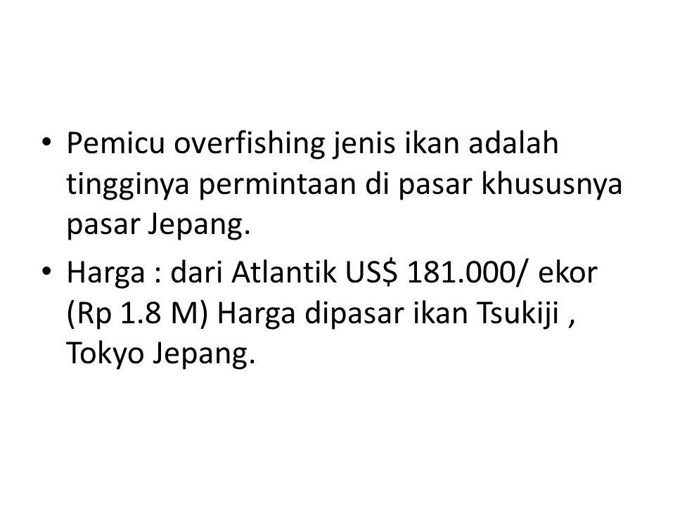 Pemicu overfishing jenis ikan adalah tingginya permintaan di pasar khususnya pasar Jepang. Harga : dari Atlantik US$ 181.000/ ekor (Rp 1.8 M) Harga di