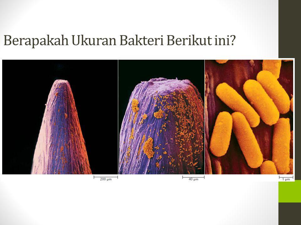 Berapakah Ukuran Bakteri Berikut ini?
