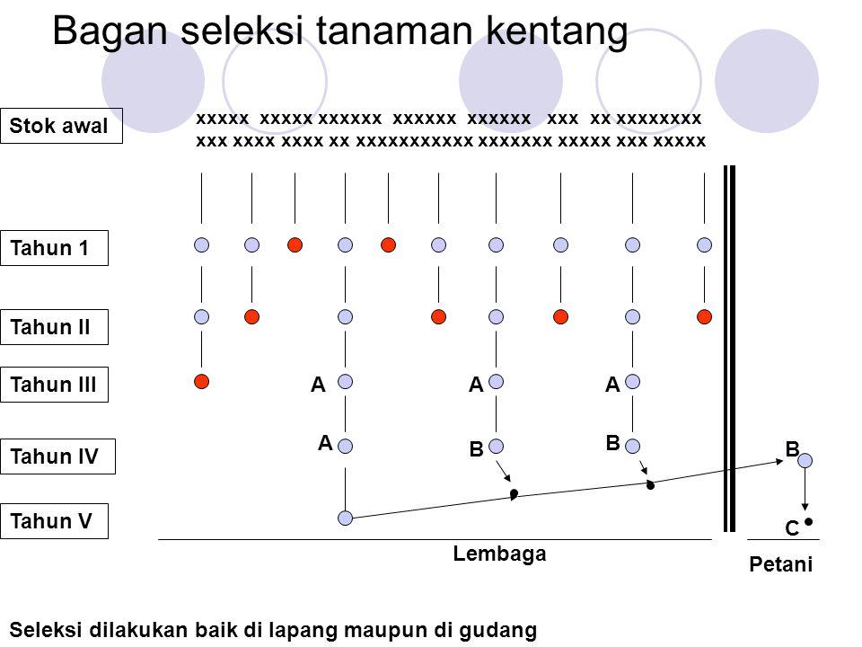 Bagan seleksi tanaman kentang Stok awal Tahun 1 Tahun II Tahun III Tahun IV Seleksi dilakukan baik di lapang maupun di gudang Tahun V xxxxx xxxxx xxxx