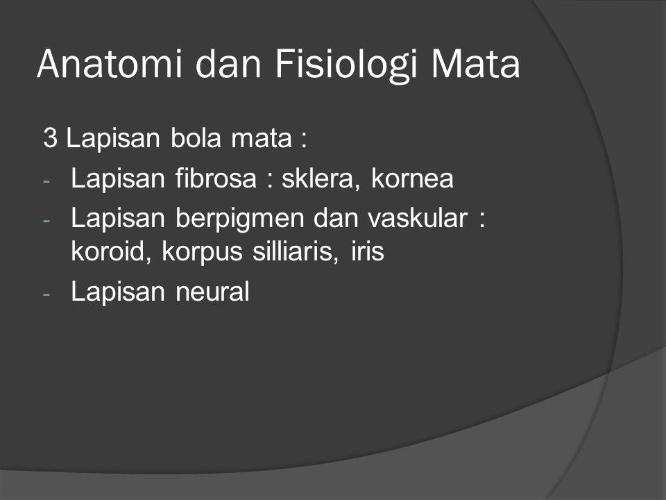 Anatomi Bilik Depan