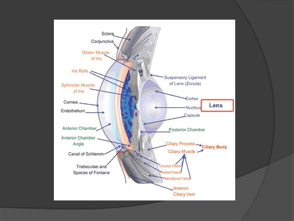 Fisiologi Lensa Untuk dapat merefraksi cahaya dengan baik, dibutuhkan dua kemampuan utama lensa yaitu: 1.