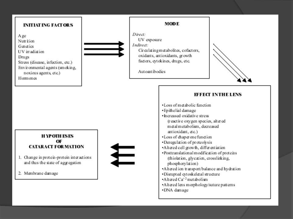 Derajat maturasi pada katarak senilis kortikal: - Derajat separasi lamelar - Katarak insipien - Katarak imatur - Katarak matur - Katarak hipermatur - Katarak Morgagni