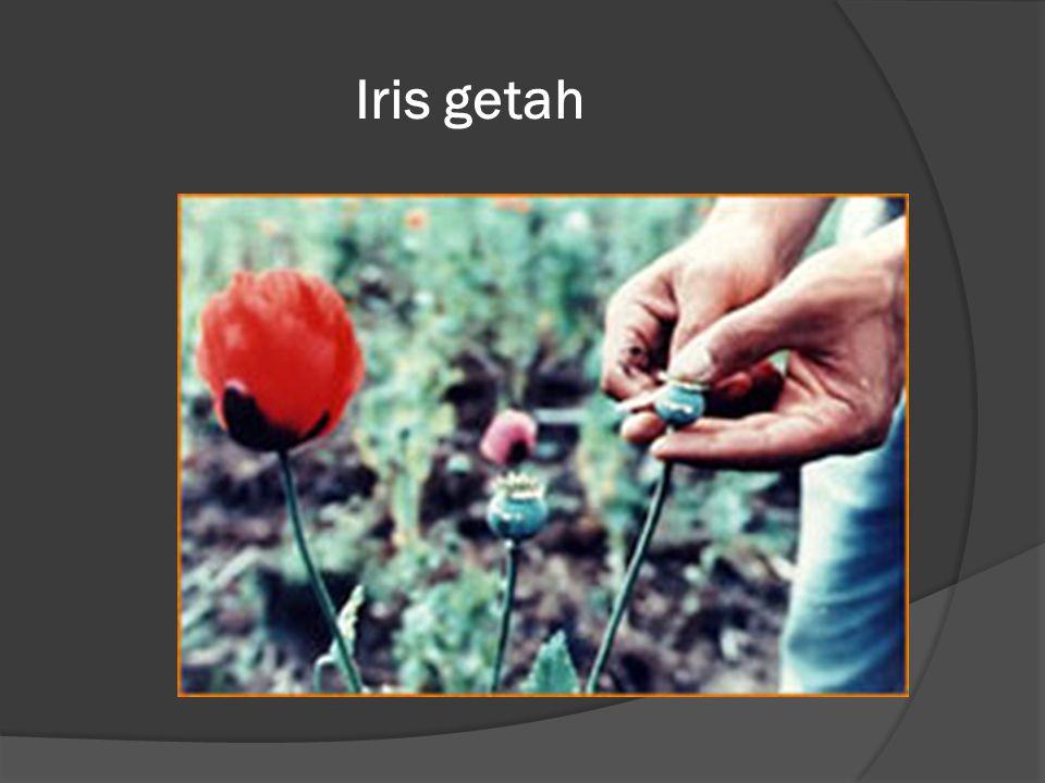 Iris getah