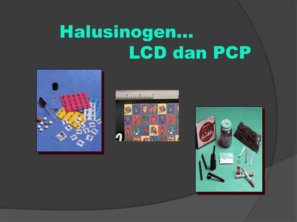 Halusinogen… LCD dan PCP