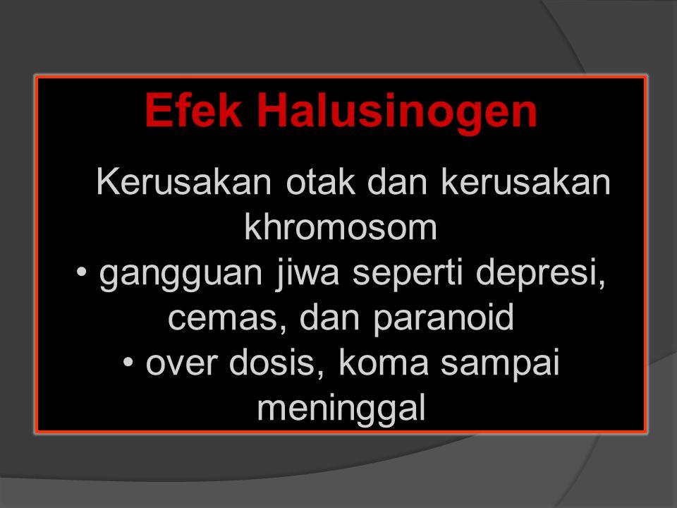 Efek Halusinogen Kerusakan otak dan kerusakan khromosom gangguan jiwa seperti depresi, cemas, dan paranoid over dosis, koma sampai meninggal