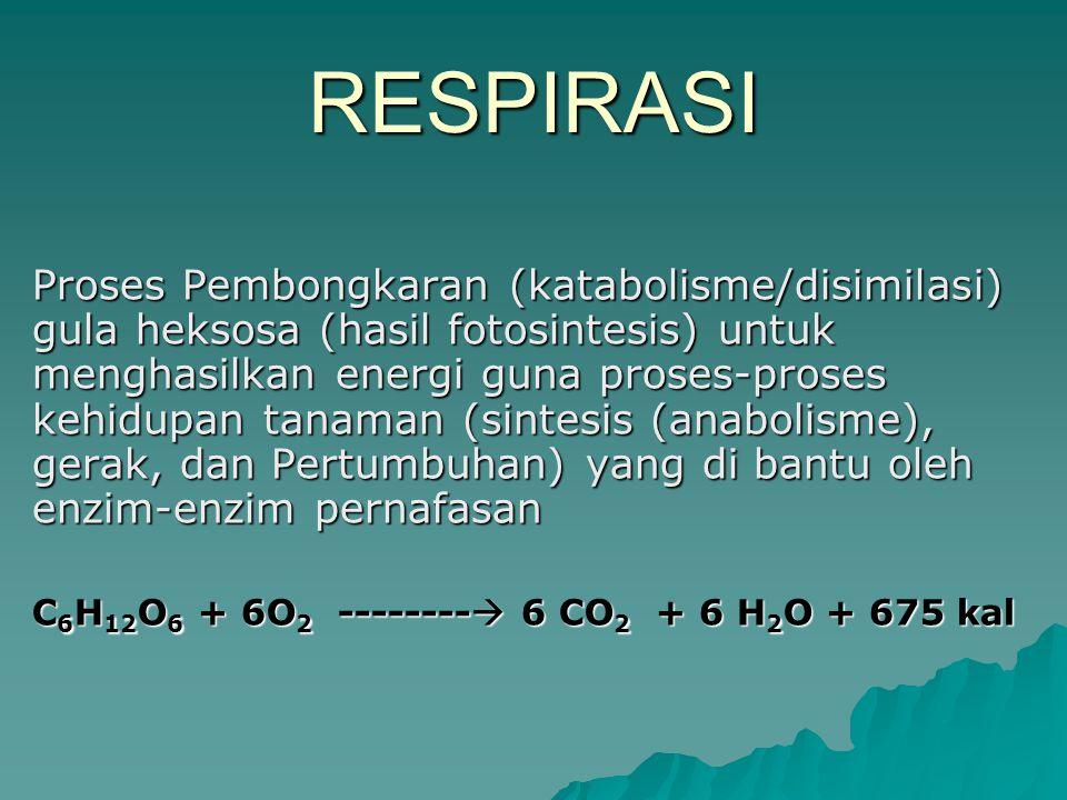 RESPIRASI Proses Pembongkaran (katabolisme/disimilasi) gula heksosa (hasil fotosintesis) untuk menghasilkan energi guna proses-proses kehidupan tanaman (sintesis (anabolisme), gerak, dan Pertumbuhan) yang di bantu oleh enzim-enzim pernafasan C 6 H 12 O 6 + 6O 2 --------  6 CO 2 + 6 H 2 O + 675 kal