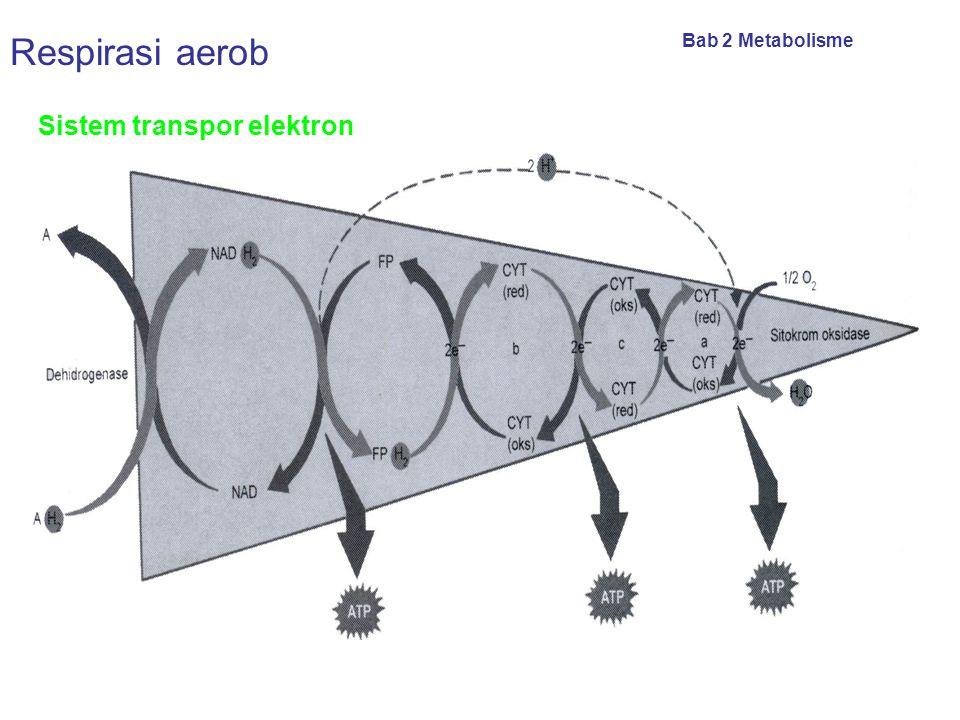 TOTAL ENERGI YANG DIHASILKAN DARI RESPIRASI SELULER Glikolisis energi yang dihasilkan = 2 ATP. Siklus krebs energi yang dihasilkan = 2 ATP. Transfer e