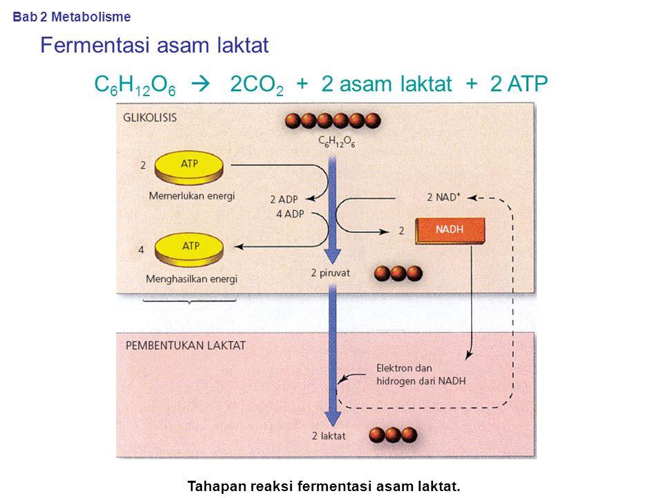 Fermentasi alkohol C 6 H 12 O 6  2CO 2 + 2C 2 H 5 OH + 2 ATP (a) Tahapan fermentasi alkohol. (b) Jamur ragi (yeast). Bab 2 Metabolisme