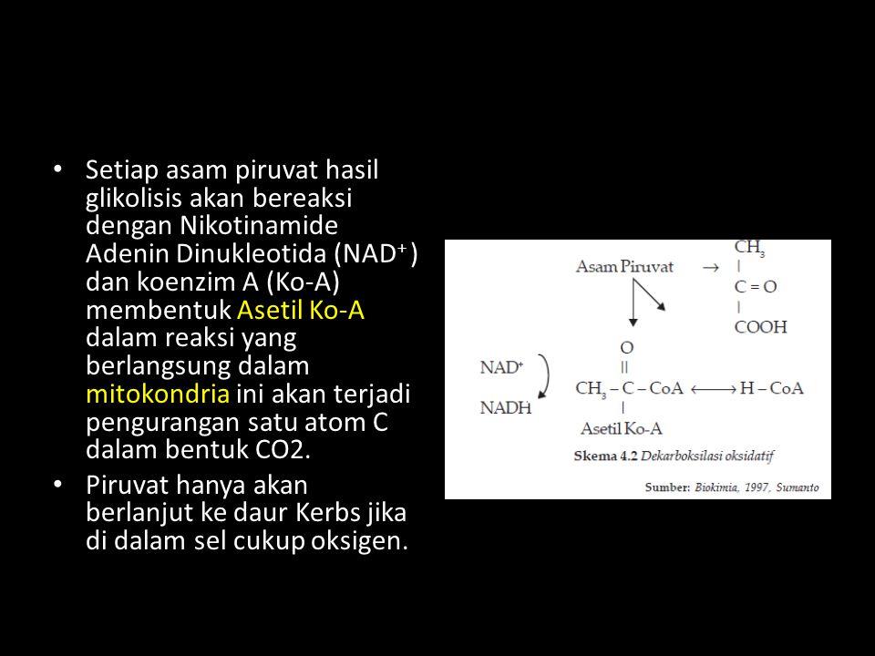 Setiap asam piruvat hasil glikolisis akan bereaksi dengan Nikotinamide Adenin Dinukleotida (NAD + ) dan koenzim A (Ko-A) membentuk Asetil Ko-A dalam r