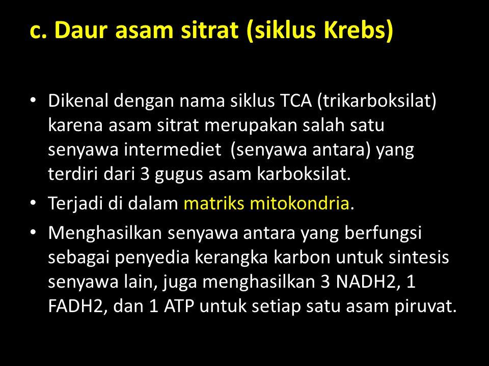 c. Daur asam sitrat (siklus Krebs) Dikenal dengan nama siklus TCA (trikarboksilat) karena asam sitrat merupakan salah satu senyawa intermediet (senyaw