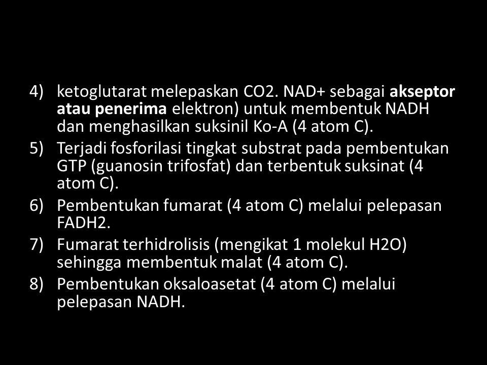 4)ketoglutarat melepaskan CO2. NAD+ sebagai akseptor atau penerima elektron) untuk membentuk NADH dan menghasilkan suksinil Ko-A (4 atom C). 5)Terjadi
