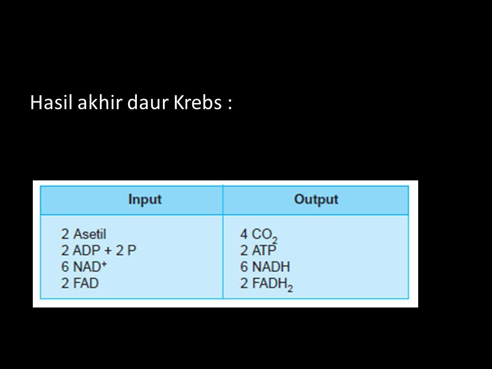Hasil akhir daur Krebs :