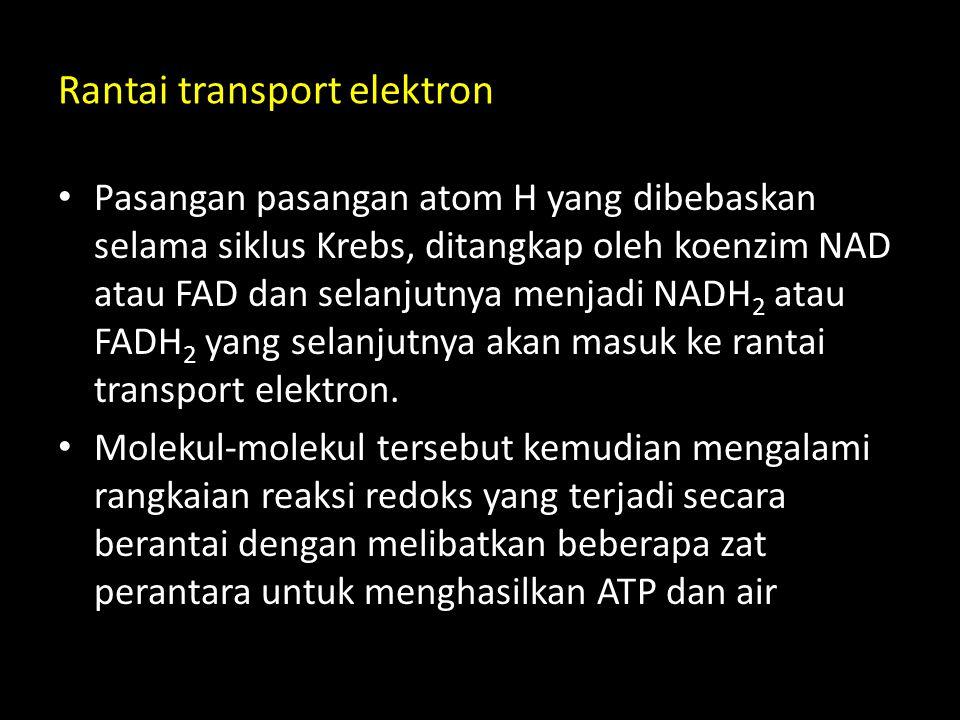 Rantai transport elektron Pasangan pasangan atom H yang dibebaskan selama siklus Krebs, ditangkap oleh koenzim NAD atau FAD dan selanjutnya menjadi NA