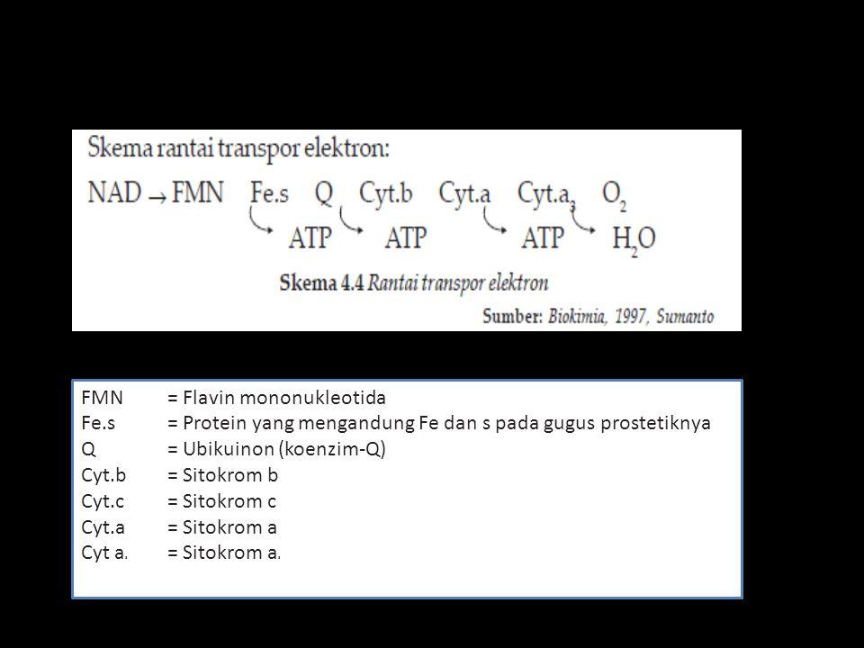FMN = Flavin mononukleotida Fe.s = Protein yang mengandung Fe dan s pada gugus prostetiknya Q = Ubikuinon (koenzim-Q) Cyt.b = Sitokrom b Cyt.c = Sitok