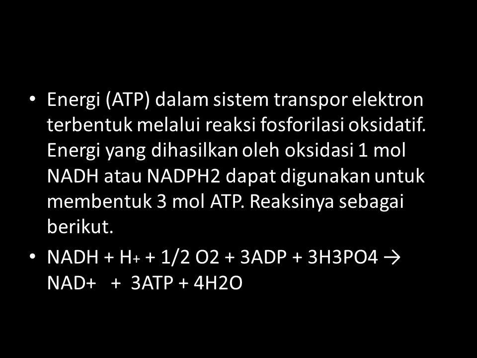 Energi (ATP) dalam sistem transpor elektron terbentuk melalui reaksi fosforilasi oksidatif. Energi yang dihasilkan oleh oksidasi 1 mol NADH atau NADPH