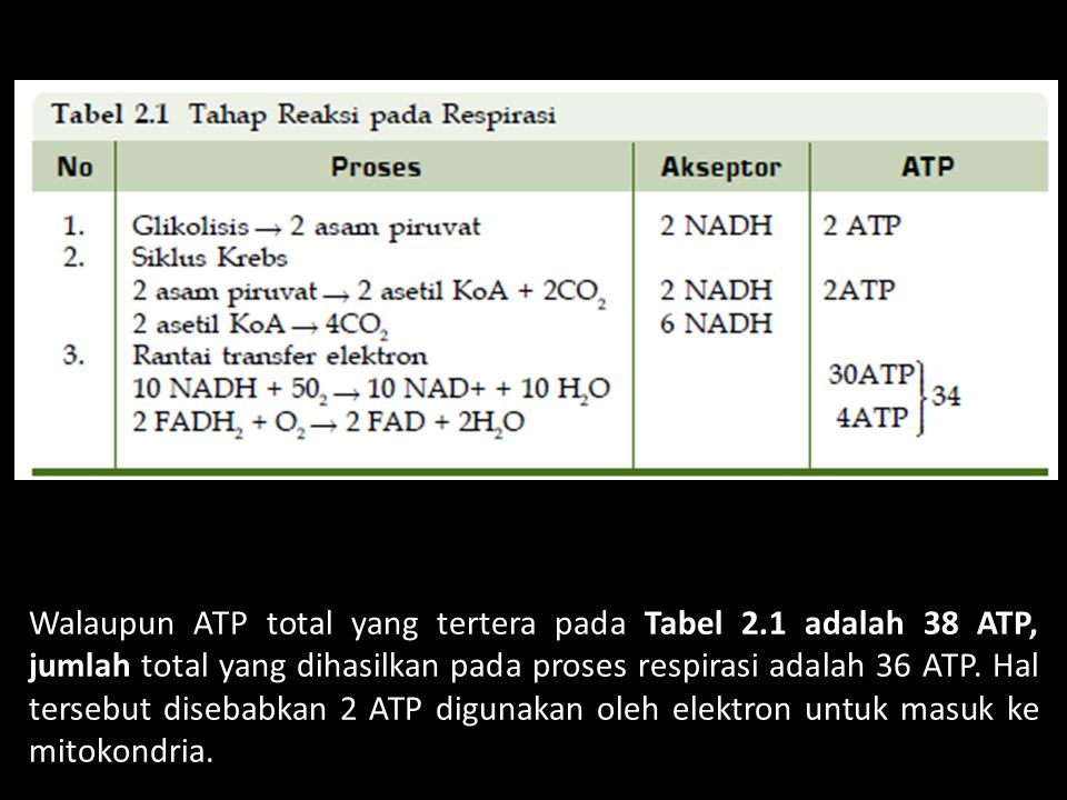 Walaupun ATP total yang tertera pada Tabel 2.1 adalah 38 ATP, jumlah total yang dihasilkan pada proses respirasi adalah 36 ATP. Hal tersebut disebabka