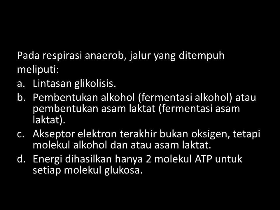 Pada respirasi anaerob, jalur yang ditempuh meliputi: a.Lintasan glikolisis. b.Pembentukan alkohol (fermentasi alkohol) atau pembentukan asam laktat (