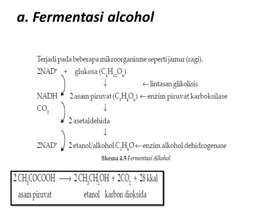 a. Fermentasi alcohol