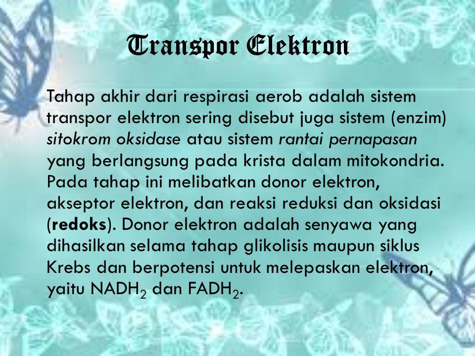 Transpor Elektron Tahap akhir dari respirasi aerob adalah sistem transpor elektron sering disebut juga sistem (enzim) sitokrom oksidase atau sistem ra