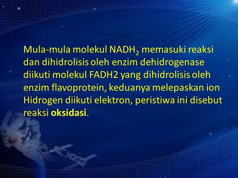 Mula-mula molekul NADH 2 memasuki reaksi dan dihidrolisis oleh enzim dehidrogenase diikuti molekul FADH2 yang dihidrolisis oleh enzim flavoprotein, ke