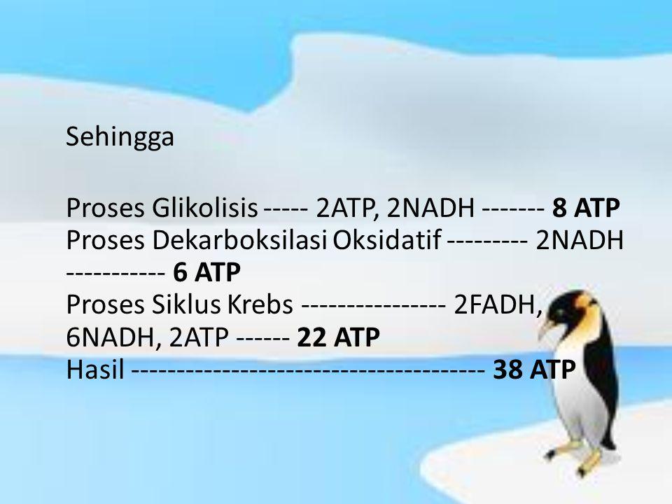 Sehingga Proses Glikolisis ----- 2ATP, 2NADH ------- 8 ATP Proses Dekarboksilasi Oksidatif --------- 2NADH ----------- 6 ATP Proses Siklus Krebs -----