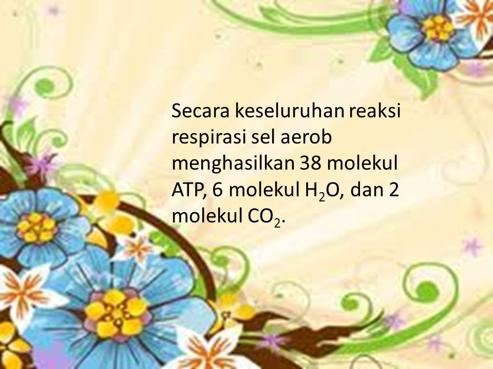 Secara keseluruhan reaksi respirasi sel aerob menghasilkan 38 molekul ATP, 6 molekul H 2 O, dan 2 molekul CO 2.
