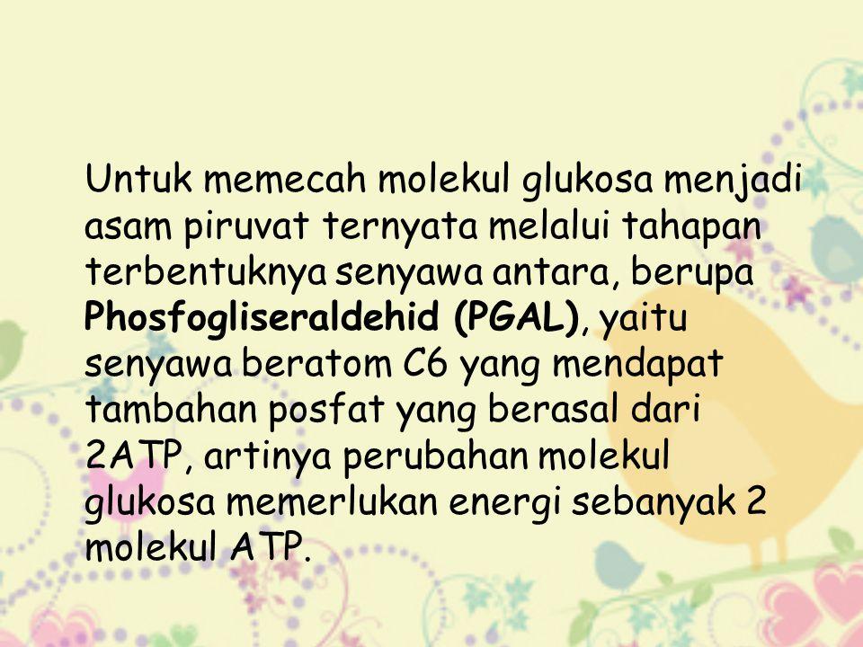 Untuk memecah molekul glukosa menjadi asam piruvat ternyata melalui tahapan terbentuknya senyawa antara, berupa Phosfogliseraldehid (PGAL), yaitu seny