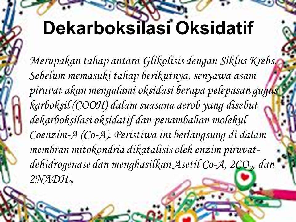 Dekarboksilasi Oksidatif Merupakan tahap antara Glikolisis dengan Siklus Krebs. Sebelum memasuki tahap berikutnya, senyawa asam piruvat akan mengalami