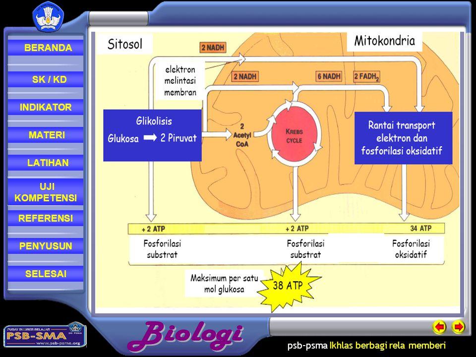 psb-psma Ikhlas berbagi rela memberi REFERENSI LATIHAN MATERI PENYUSUN INDIKATOR SK / KD UJI KOMPETENSI BERANDA SELESAI Transfer Elektron berlangsung di Membran dalam Mitokondria